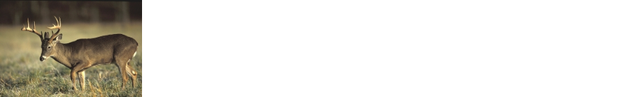 Feed Whitetail Deer.com